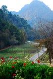 Jardim de flor em Tailândia Imagens de Stock