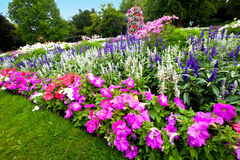 Jardim de flor Manicured com azáleas coloridas. Foto de Stock Royalty Free
