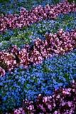 Jardim de flor urbano Imagem de Stock