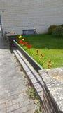 Jardim de flores Imagem de Stock