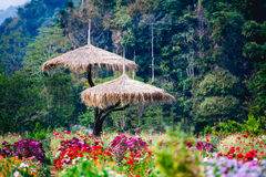 Jardim de flores bonito na montanha do angkhang do doi, Chiang Mai, T Foto de Stock