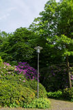 Jardim de flores da natureza Foto de Stock Royalty Free