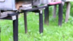 Jardim de flores e colmeias video estoque