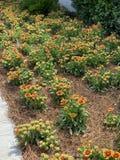 Jardim de flores selvagens imagem de stock