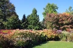 Jardim de florescência Imagens de Stock