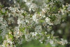 Jardim de florescência Imagens de Stock Royalty Free