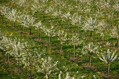Jardim de florescência Imagem de Stock