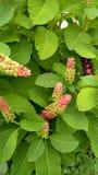 Jardim de florescência flowers_4 Imagem de Stock Royalty Free