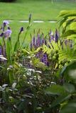 Jardim de florescência fresco da mola com perennials fotos de stock royalty free