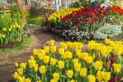 Jardim de florescência fresco das tulipas na primavera fotos de stock royalty free