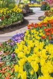 Jardim de florescência fresco das tulipas na primavera imagem de stock royalty free