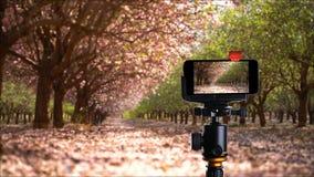 Jardim de florescência na primavera filme