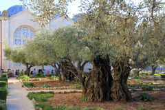 Jardim de Gethsemane Fotografia de Stock Royalty Free