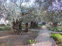 Jardim de Gethsemane foto de stock