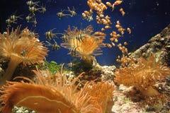 Jardim de infância dos peixes Fotografia de Stock