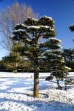 Jardim de Japão Fotografia de Stock Royalty Free
