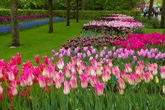 Jardim de Keukenhof, Holland Imagem de Stock Royalty Free