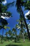 Jardim de Palmtree na República Dominicana Fotos de Stock Royalty Free