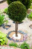 Jardim de rocha bonito Imagem de Stock