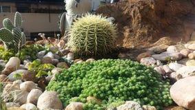 Jardim de rocha bonito do cacto Fotos de Stock Royalty Free