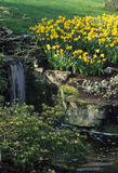 Jardim de rocha calmo da mola Fotografia de Stock Royalty Free