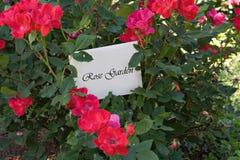 Jardim de rosas Imagem de Stock
