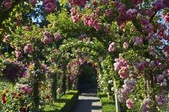 Jardim de rosas Imagens de Stock