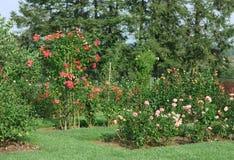 Jardim de rosas Imagem de Stock Royalty Free