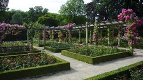 Jardim de rosas foto de stock