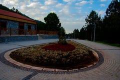 Jardim de rosas bonito na montanha Babadag de Denizli Imagens de Stock