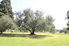 Jardim de rosas do estado de Vitoria em melbourne, Austrália Foto de Stock