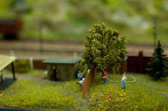 Jardim de Sammer Fotos de Stock
