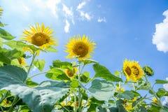 Jardim de Sun Fotos de Stock
