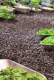 Jardim de telhado Fotografia de Stock Royalty Free