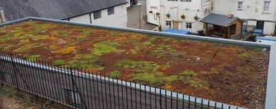 Jardim de telhado vivo fotografia de stock
