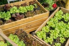 Jardim de vegetais Foto de Stock