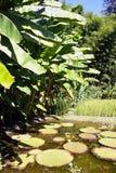 Jardim decorativo do bambu de Anduze da bacia Foto de Stock