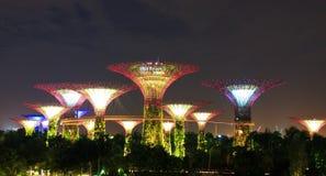 Jardim distante da noite pela árvore de baía Imagens de Stock