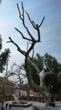Jardim do Éden e árvore antiga do conhecimento Foto de Stock