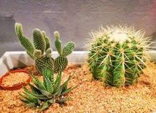Jardim do ‹do nature†do deserto do ‹do cactus†do ‹de The†imagens de stock royalty free
