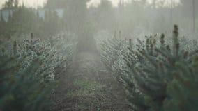 Jardim do abeto sob a chuva video estoque
