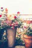Jardim do balcão do outono Vários potenciômetros de flores no terraço ensolarado imagens de stock royalty free