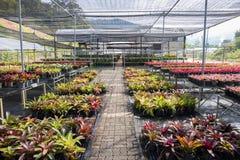 Jardim do berçário da planta em do norte de Tailândia Imagens de Stock