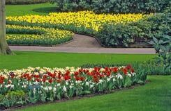 Jardim do bulbo da mola Imagens de Stock Royalty Free