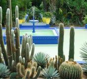Jardim do cacto Imagem de Stock Royalty Free