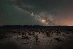 Jardim do cacto de Cholla sob a galáxia da Via Látea Imagem de Stock Royalty Free