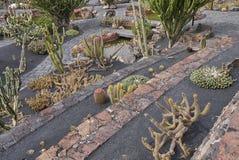 Jardim do cacto em lanzarote fotos de stock royalty free