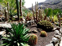 Jardim do cacto fora da pedra nas montanhas de Gran Canaria, Espanha imagens de stock royalty free