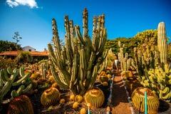 Jardim do cacto na ilha de Gran Canaria imagens de stock royalty free