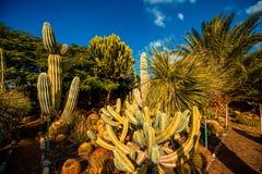 Jardim do cacto na ilha de Gran Canaria imagens de stock